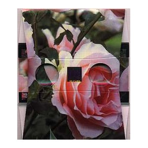Stereoscope : THE BUNCH OF PINK ROSES