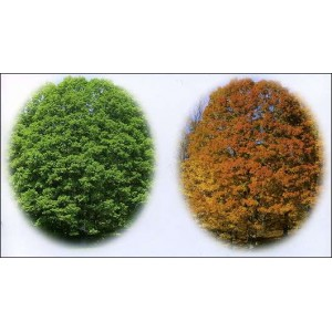 Flipbook : Mr Houghton's Tree