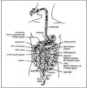 PARCOURS INTESTINAL (Intestinal Course) - Eatable Edition 9