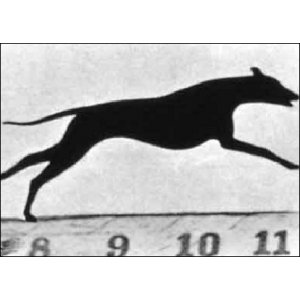 Flipbook : The Greyhound running