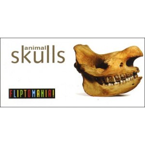 Flipbook : Animal Skulls
