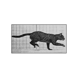 Flipbook : Cat Galloping