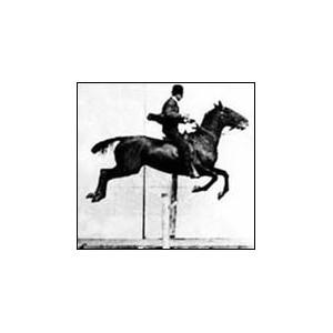 Flipbook : Daisy jumping a hurdle