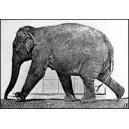 Flipbook : L'Eléphant