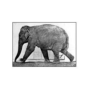 Flipbook : Elephant Walking