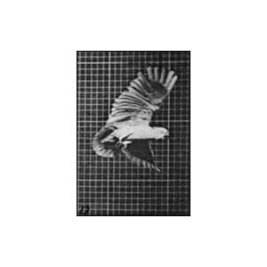 Flipbook : Le Perroquet