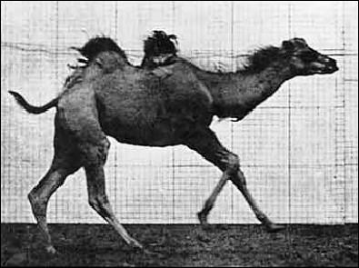La course du chameau - un flipbook de MUYBRIDGE