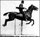 Daisy jumping a hurdle - a flipbook by MUYBRIDGE