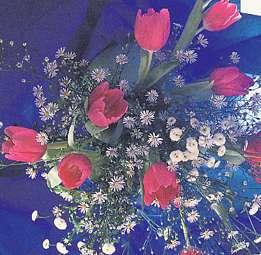 Fleurs bleues - vue stéréoscopique