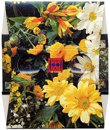 Fleurs jaunes - Visionneuse stéréoscopique