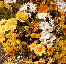 Yellow bunch of flowers - stereoscopic view