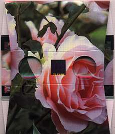 A pink bunch of roses - 3D viewer