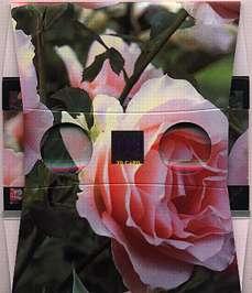 Des Roses roses - Visionneuse stéréoscopique