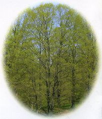 Mr HOUGHTON's TREE - Un flipbook américain - Le printemps
