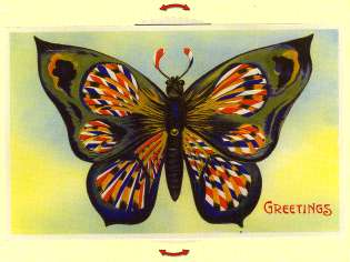 Butterfly Moving Card